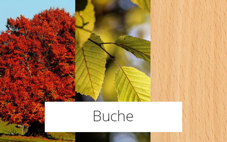 Buche
