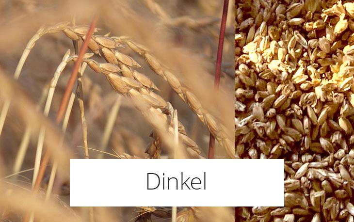 Dinkel