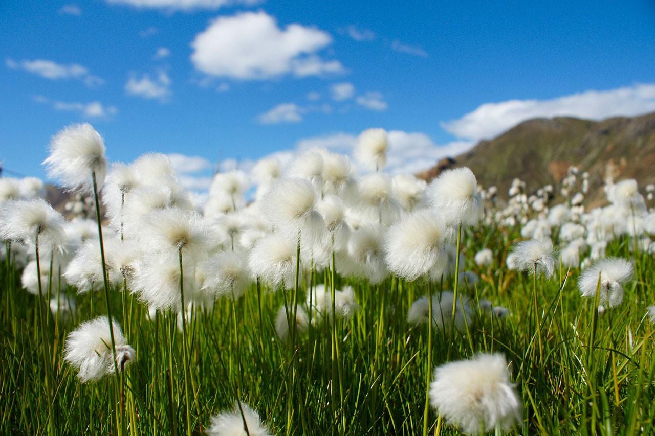 Die Frühlings-Kur für euren Futon