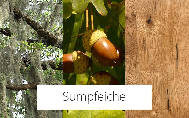 Sumpfeiche / Mooreiche